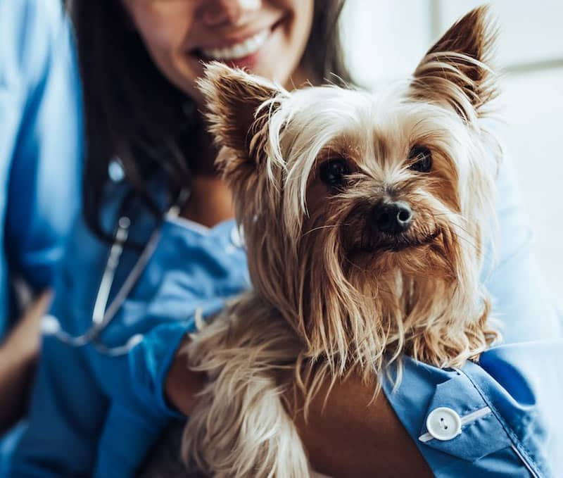 Is Pet Insurance Worth It: A Charleston Financial Planner's Perspective